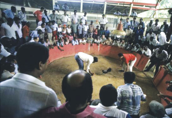 Cockfighting, Guadeloupe
