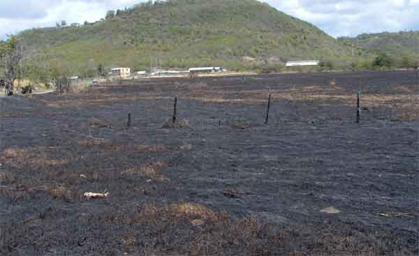 A burnt out area near the Beausejour Agricultural complex in Vieux Fort