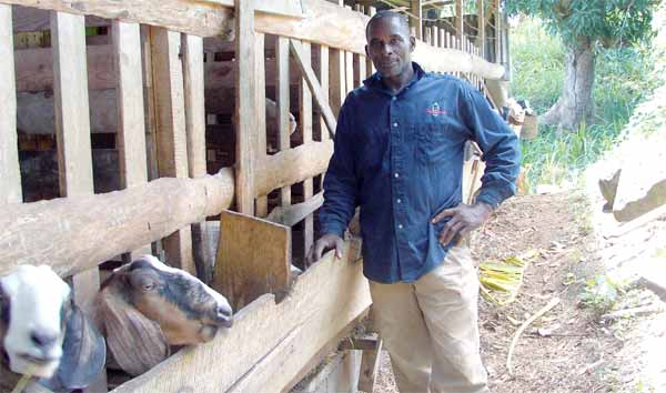 Epiphanus Verneuil at his goat-rearing farm