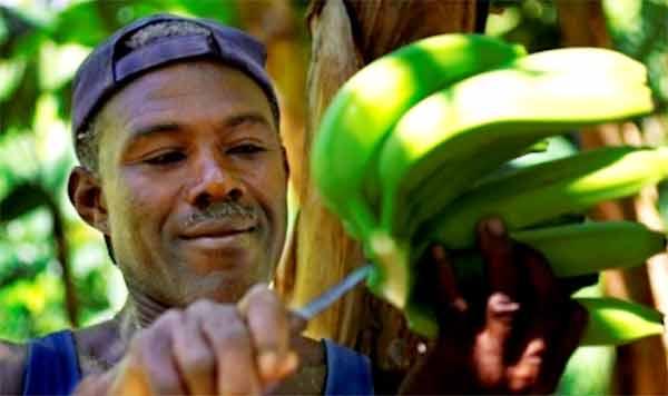 Image of Farmer harvesting fruit.