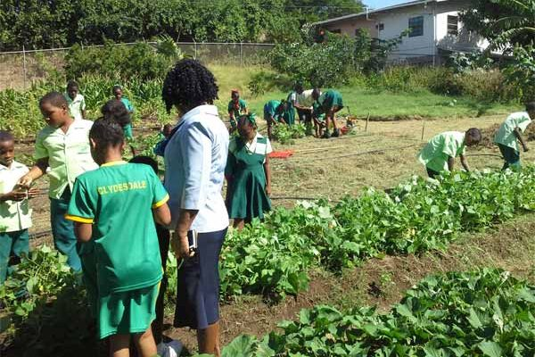 Image: Students of Gros Islet Primary School tending to their garden.