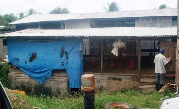 Image: The chicken farm shut down by the authorities