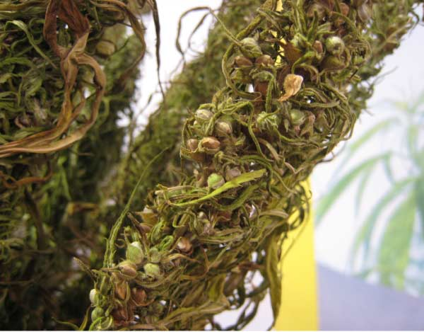 One person called for emphasis on agriculture including cultivation of  hemp.