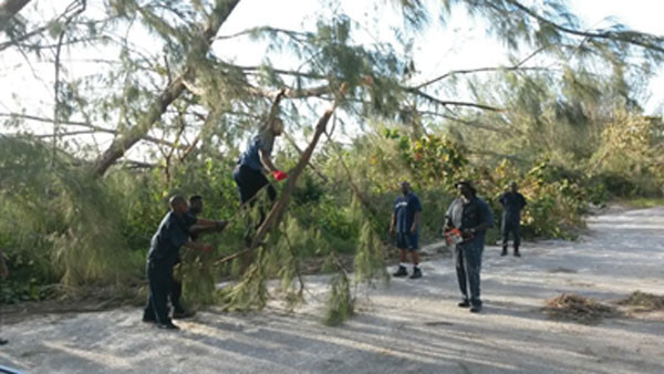img: Workers removing branches from fallen tree in Andros
