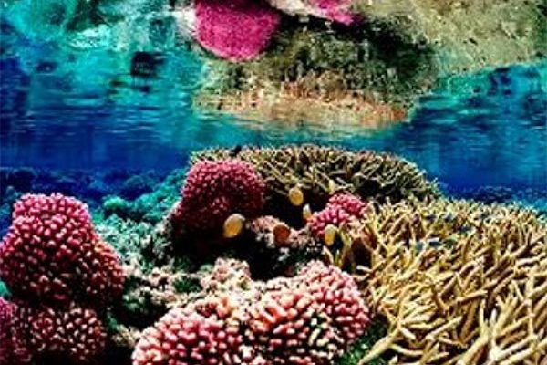 Image of Coral reefs