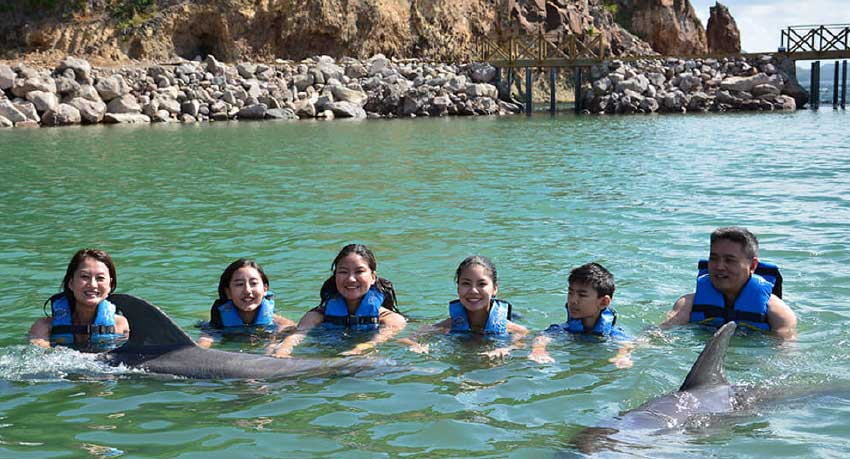 Image of visitors swimming with dolphins at DDI's facility in St Kitts.