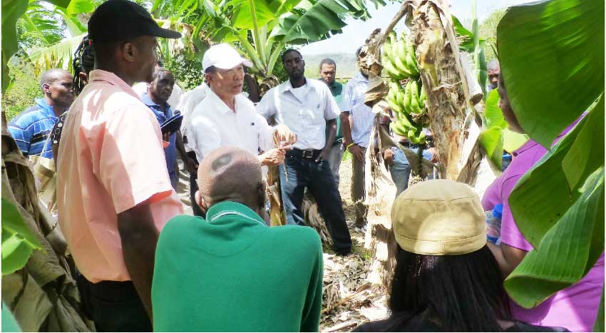 Image: Dr. Chao, Chih-Ping, the director of TBRI (Taiwan Banana Research Institute), imparts technical knowledge to banana farmers about Black Sigatoka during a field workshop.
