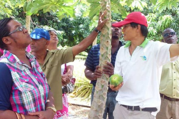 Image: Fruit and vegetable farmers receiving instructions from Taiwanese expert.