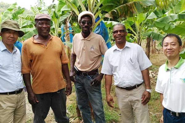 Image: Taiwan Banana expert Dr.Chih-Ping Chao (left) and the leader of Taiwan technical mission in Saint Lucia Mr. Vincent Yang (right) together with local farmers.