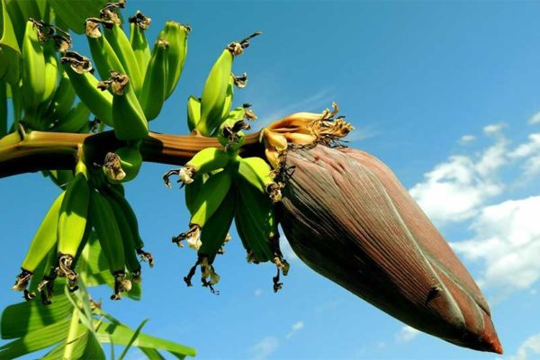 Image: OECS' plant protection initiatives have been recognised.
