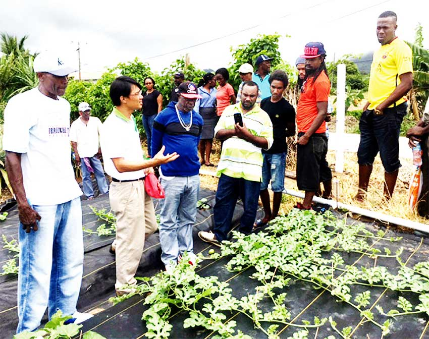 Image: Taiwan Assists Farmers In Cantaloupe Production