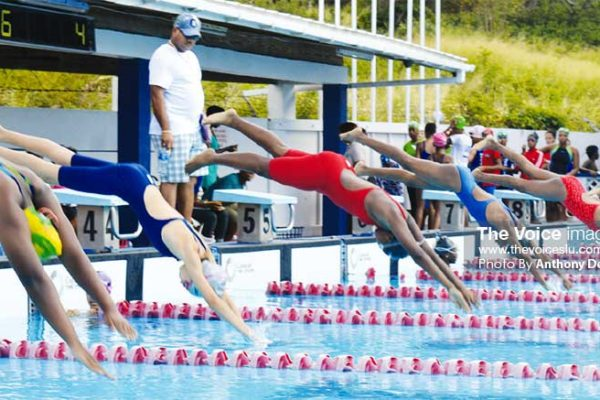 Image: Start of the girls 10 -11 50 SC metre freestyle. (PHOTO: Anthony De Beauville)