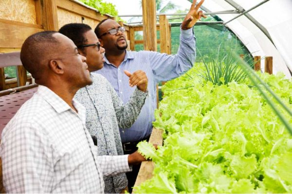 Image: Minister Dean Jonas and distinguished colleagues inspect crop production using aquaponics. (Photo:OECS)