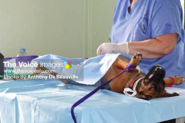 Image: Procedure currently on in the Surgical room. (PHOTO: Anthony De Beauville)