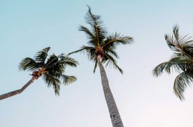 Image of coconut trees