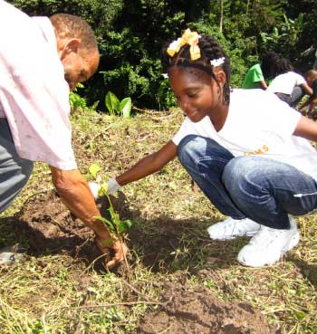Image: SLNT coordinates tree planting initiative in Soufriere.
