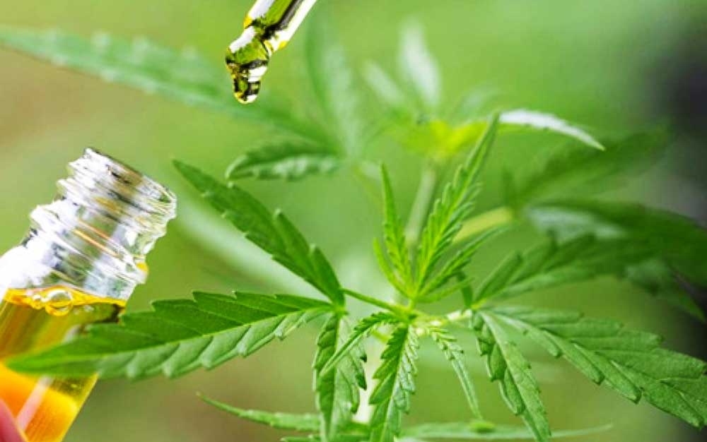 Image of Medicinal cannabis